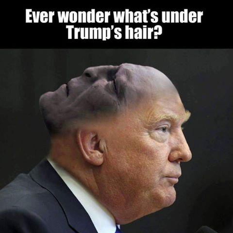 Lo que realmente hay en la cabeza de Trump